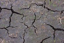 Arid, Rice Stock Image
