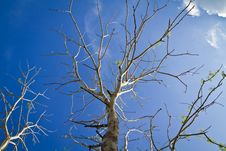 Free Dead Tree Stock Photography - 19733282