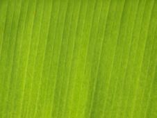 Free Banana Leaf Stock Photos - 19734123