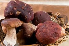 Free Basket Full Of Mushrooms Stock Image - 19734761