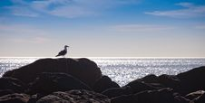 Free Seagull Resting On Rocks Stock Photos - 19734993
