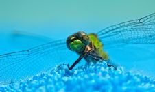 Close-Up Of Green Dragonfly Stock Photography