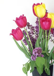 Free Syringa And Tulips Bouquet Royalty Free Stock Images - 19735929