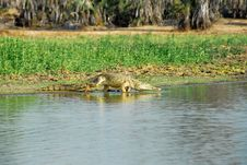 Free Nile Crocodile In The Rufiji River, Selous Reserve Stock Photo - 19737500