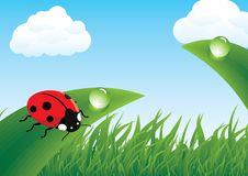 Free Ladybug On Grass Stock Photo - 19737630