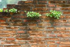 Old Brick Wall And New Grass Royalty Free Stock Photography
