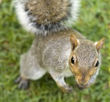 Free Cute Squirrel Standing Upright Stock Photography - 19739012