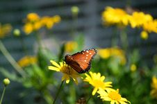 Free Butterfly On A Flower Stock Photo - 19739030