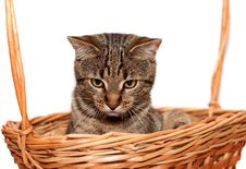 Free Cat In Basket Royalty Free Stock Image - 19739516