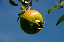Free Pomegranate Stock Photo - 19739790