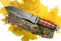 Free The Hunting Knife Royalty Free Stock Photo - 19749555