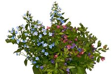 Free Spring Bouquet - Forget-me-not And Lungwort Royalty Free Stock Images - 19741159