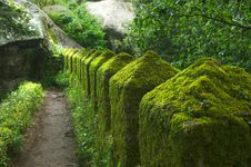 Free Moss On The Wall Stock Photos - 19749443