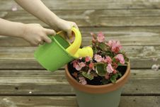 Girl Watering Potted Flowers Royalty Free Stock Photo