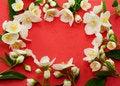Free Beautiful Jasmine Stock Photos - 19754583