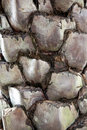 Free Palm Tree Bark Stock Images - 19755694