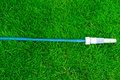 Free Blue Hose On The Green Grass Royalty Free Stock Photo - 19757375