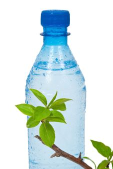 Free Bottle Of Water With Green Apple Branch Stock Photos - 19751213