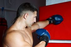 Free The Young Boxer In Gloves Stock Photo - 19753340