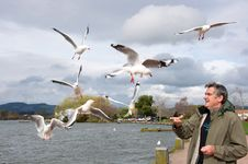 Free Man Feeding Gulls Stock Photo - 19753490