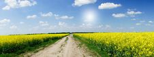 Free Amazing Yellow Field Of Rapeseeds And The Blue Sky Stock Image - 19755121