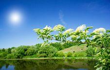 Free Wonderful Elderberry And Splendid Sunbeams Royalty Free Stock Images - 19755159