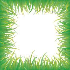 Free Green Grass Royalty Free Stock Photo - 19755835