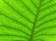 Free Green Leaf Stock Images - 19756384