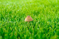 Mushroom On A Green Grass Stock Photography