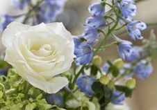 Free Exquisite White Rose Royalty Free Stock Photo - 19757915