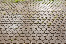 Free Wet Brick Floor Royalty Free Stock Image - 19758816