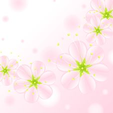 Free Flowers. Set Of Pink Blossoms Royalty Free Stock Photos - 19759078