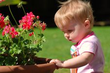 Toddler Looking At Geraniums In Pot Royalty Free Stock Images