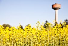 Free Country And Water Tower Stock Photo - 19759500