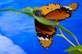 Free Butterfly II Royalty Free Stock Photography - 19765377