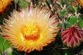 Free Cactus Stock Photo - 19766920