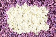 Free Frame Of White And Dark Lilac Flowers Royalty Free Stock Photo - 19760685