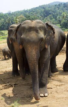 Free Elephants Stock Photography - 19762352