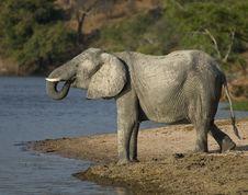 Free Elephant At Water Stock Photos - 19762823