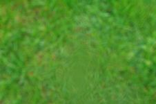 Free Grass Background Royalty Free Stock Images - 19763329
