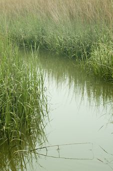 Free Marsh Grasses Royalty Free Stock Images - 19763419
