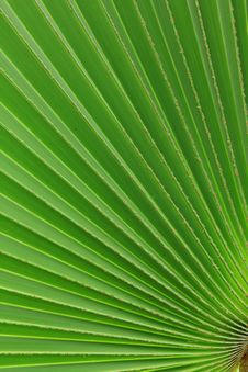 Free Palm Leaves Stock Images - 19763684