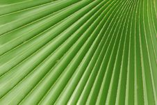 Free Palm Leaves Royalty Free Stock Image - 19763696