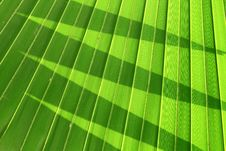 Free Palm Leaves Stock Photo - 19763710
