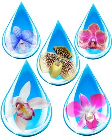 Free Orchids In Water Droplets Stock Image - 19766791