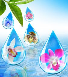 Free Orchids In Water Droplets Royalty Free Stock Image - 19766816