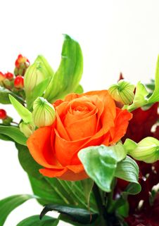 Free Beautiful Rose And Green Isolated On White Royalty Free Stock Image - 19767056