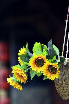 Free Sunflower Stock Photo - 19767700