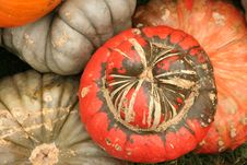 Free Multicolored Pumpkins Stock Images - 19768644