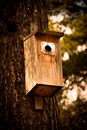 Free Nesting Box Royalty Free Stock Photography - 19772587